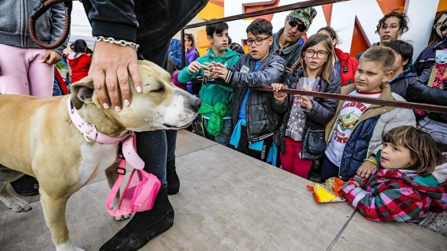Fan Mallorca acoge el sábado un desfile de mascotas