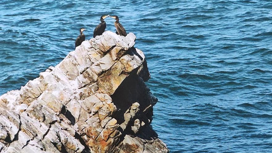 Barcia señaliza La Cangrexa, su senda litoral