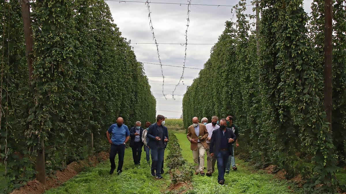 El consejero de Agricultura, Ganadería y Desarrollo Rural visita una explotación de lúpulo en Gavilanes de Órbigo, León.