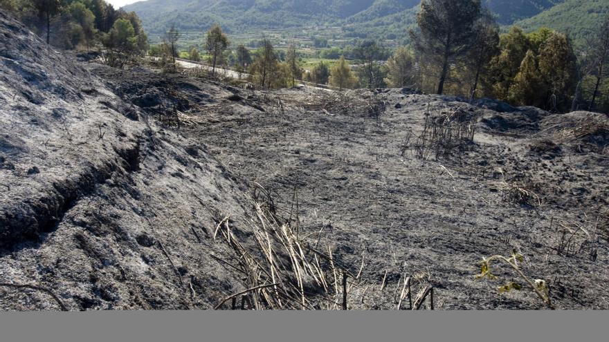 El incendio de Aielo arrasa 5 hectáreas de pinar