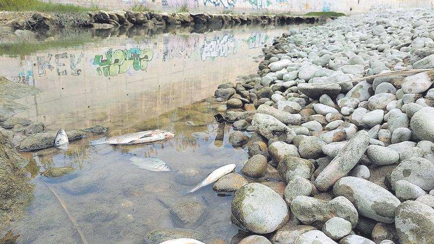 El cierre de Beniarrés seca el tramo final del Serpis y mata cientos de peces