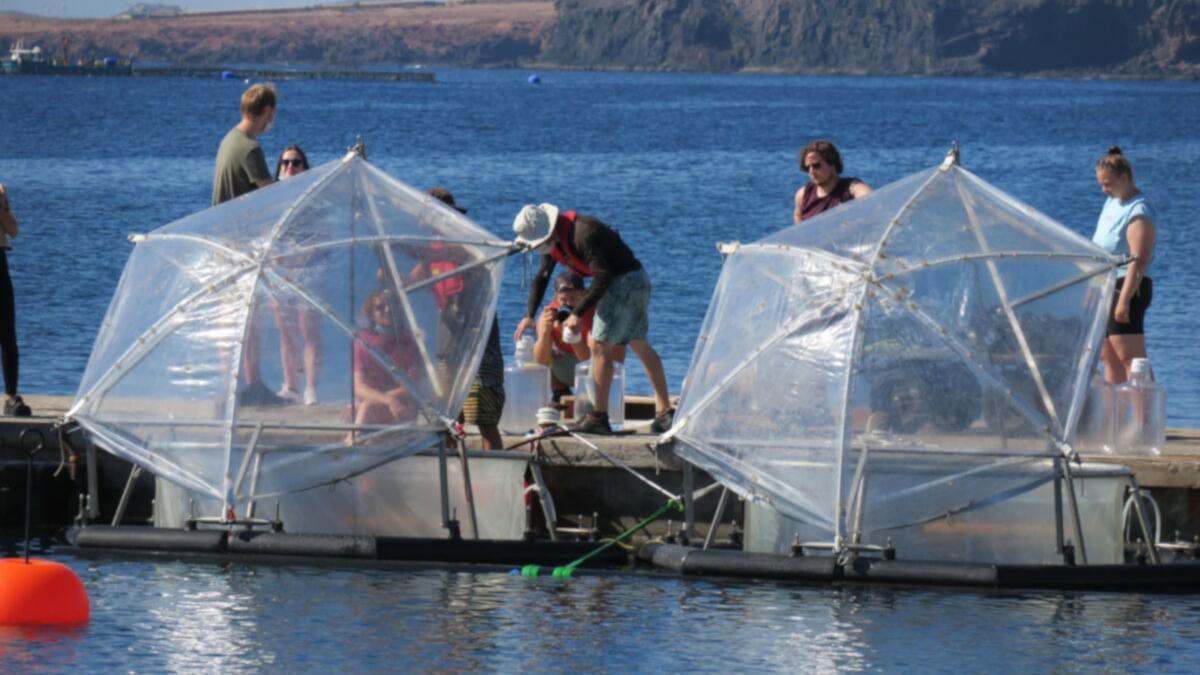 Canarias, sede un experimento para acelerar la captación de CO2 por el mar