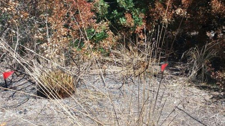 Medio Ambiente concluye que el incendio de ses Feixes fue intencionado