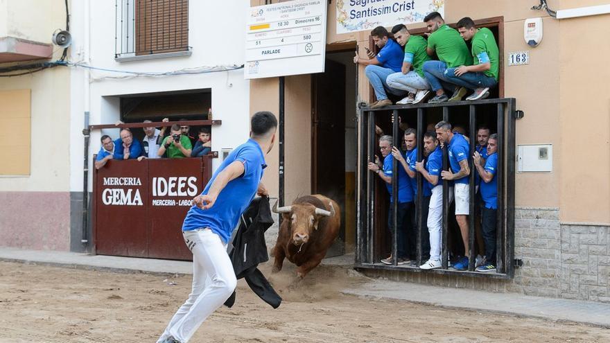 La Vall solo exhibirá los toros de las fiestas si permiten el 'bou al carrer'