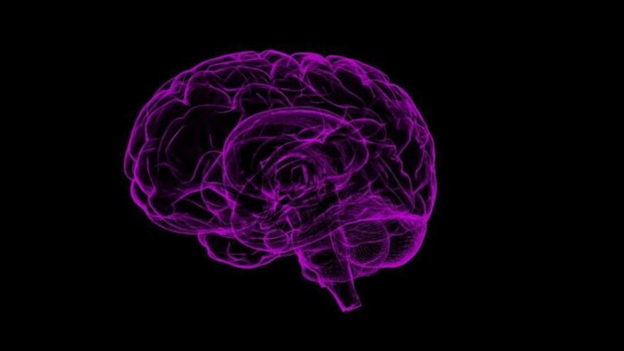 Paradoja evolutiva: nuestra cultura y lenguaje proceden del cerebelo