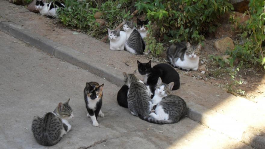 Villena aprueba un plan para controlar las colonias felinas