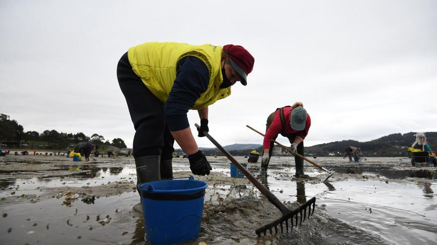 Convocan 12 nuevos permisos de marisqueo a pie en Lourizán