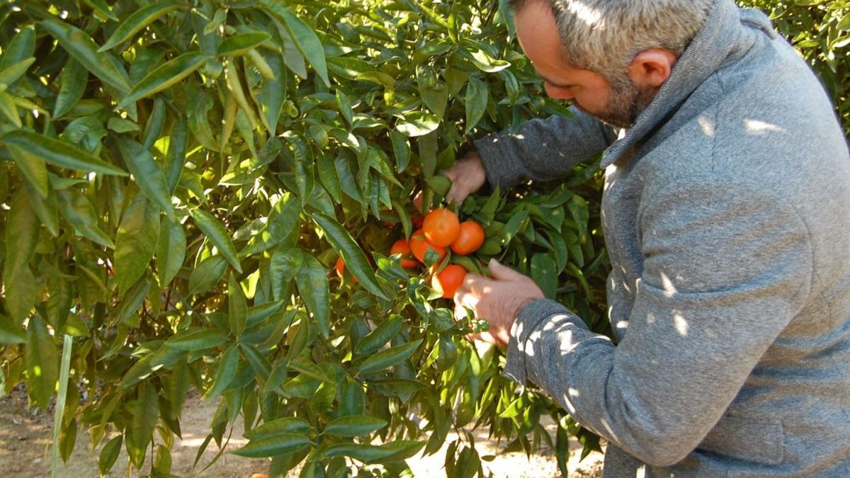 Los robos de cosechas descienden un 60 % en 6 años en València