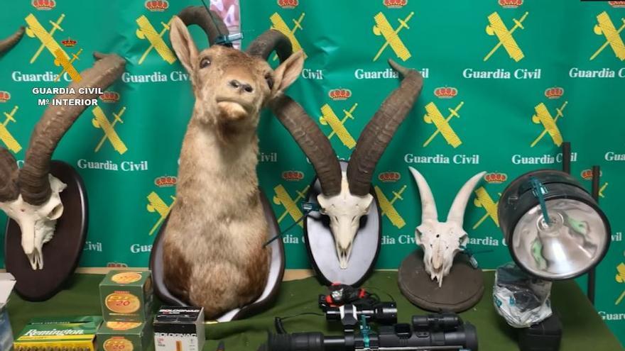 Dos detenidos por cazar ejemplares de cabra montés en un coto privado de Nerja