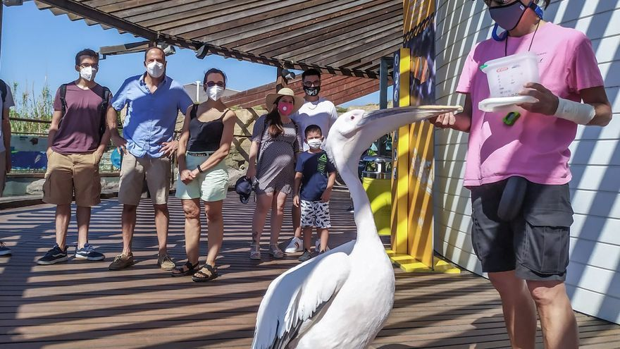 El Oceanogràfic obtiene el Certificado de Turismo Seguro