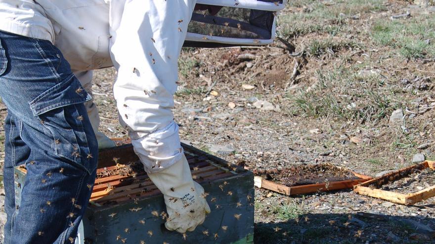 La Unión Profesional de Apicultores de Zamora se incorpora a la AECOC