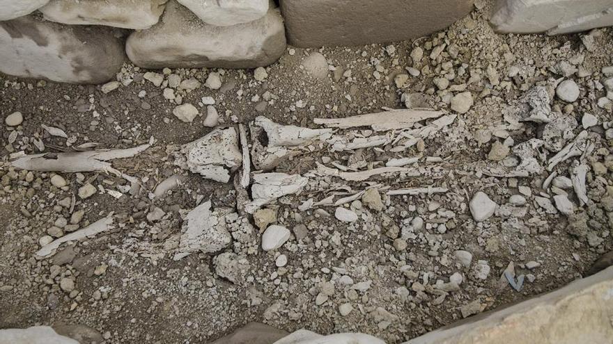 Hallados una mandíbula y un cráneo en una excavación del castro de San Lourenzo