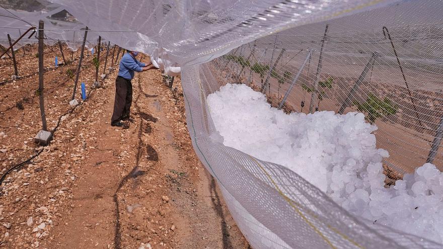 El granizo ocasiona pérdidas de 1,5 millones en la uva de mesa del Vinalopó