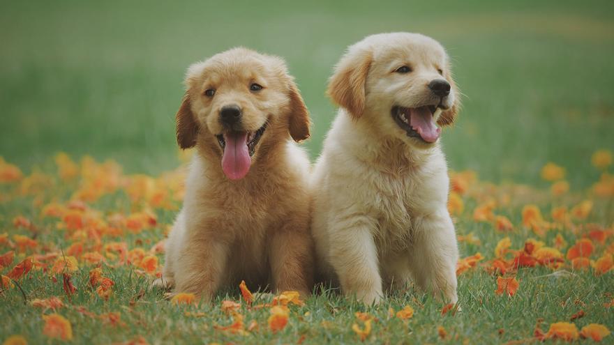 Las 5 mejores razas de perro para tener en casa con niños