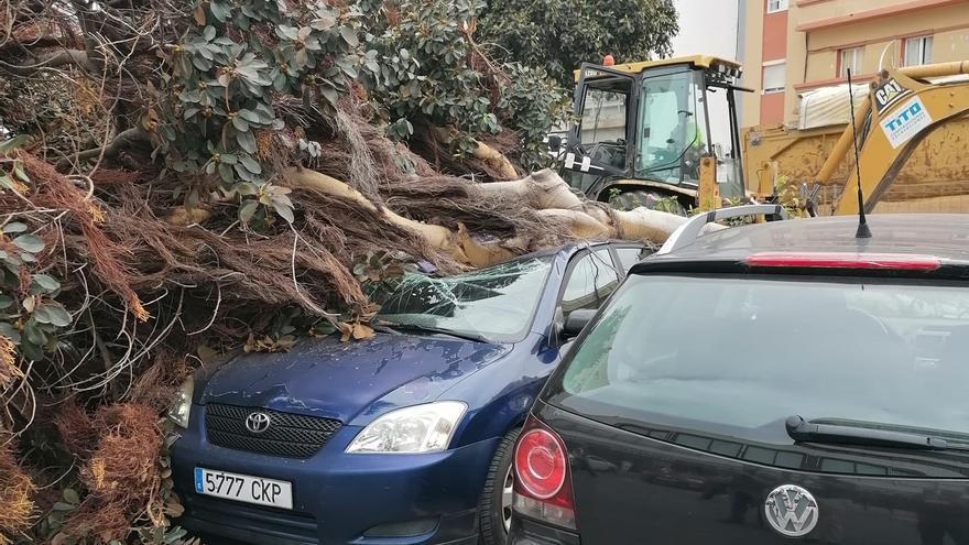 Un tractor de las obras de la Metroguagua tumba un árbol que cae sobre tres vehículos