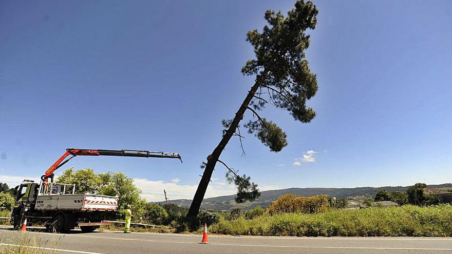 Cortan un carril de la N-525 en Taboada para talar un pino
