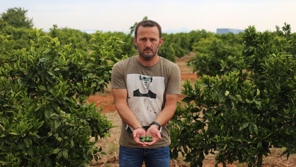Un agricultor muestra los efectos que el 'cotonet' causa en sus cítricos.