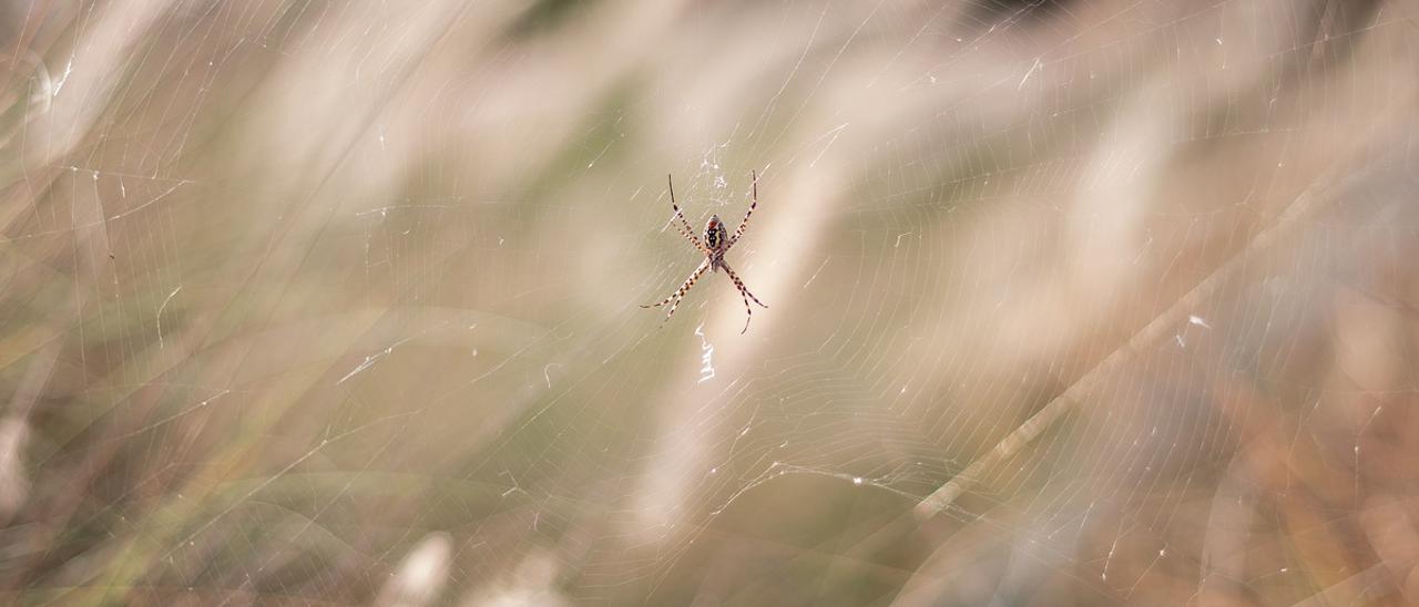 Cómo tratar las picaduras de insectos y arañas