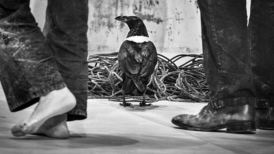 Polèmica a Figueres per la celebració d'un espectacle de la companyia Baró d'Evel amb un corb