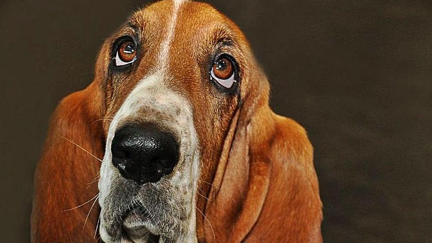 ¿Han podido quitar y robar el chip a mi perro?