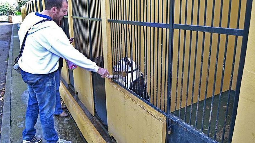 Cort estudia eliminar una nave con jaulas para perros en Son Reus