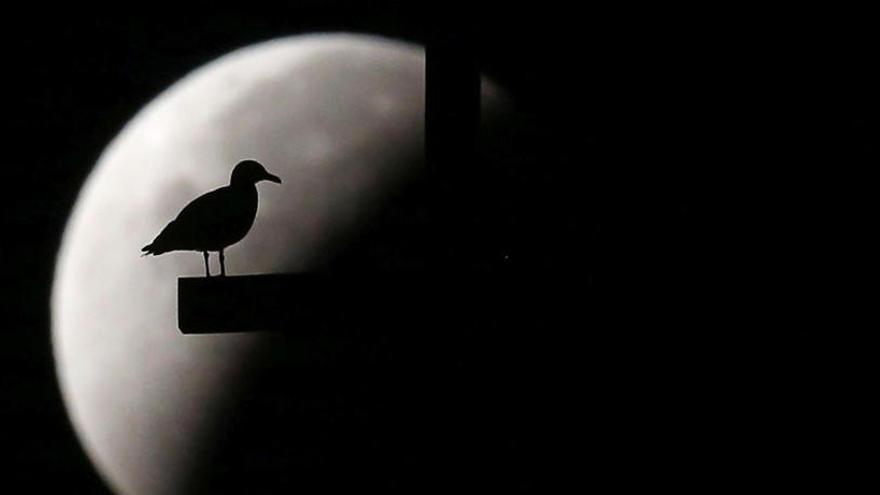 ¿Cómo afecta un eclipse solar a las personas?