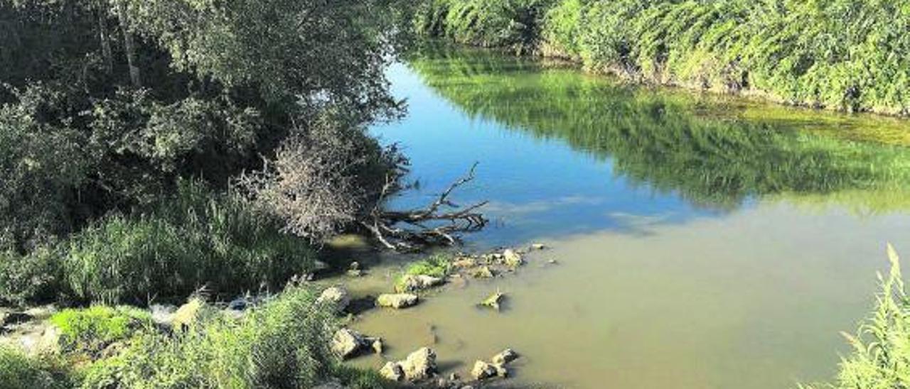 Una imagen de archivo del río Xúquer.