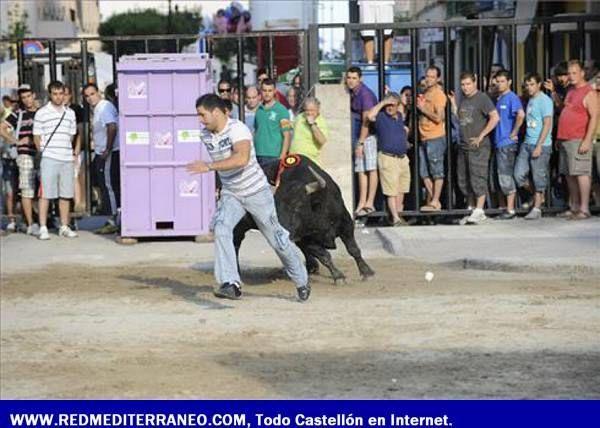 LOS TOROS ASEGURAN LA DIVERSIÓN EN LAS FIESTAS DE SANT PERE
