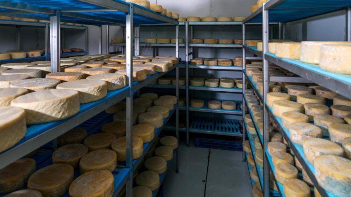 El Cabildo aprueba la concesión de hasta 9.000 euros de ayudas a las queserías artesanales .
