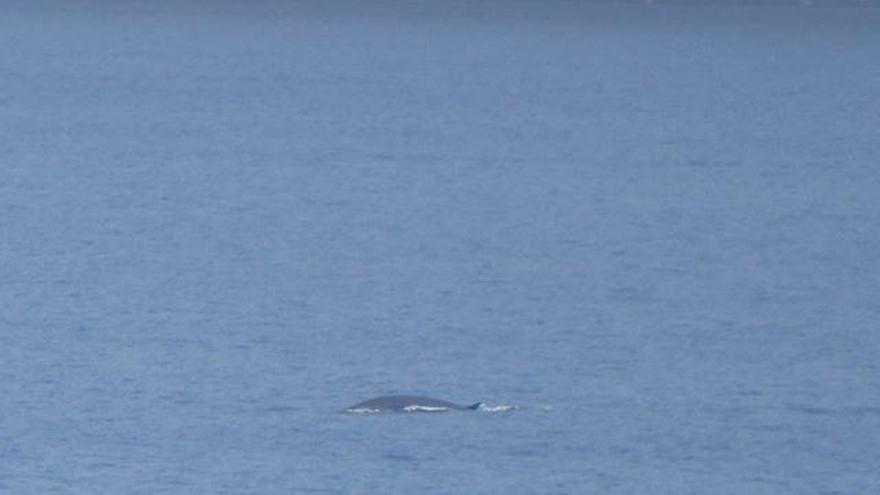 Bei Port d'Andratx: Wale in Gewässern vor Mallorca gesichtet