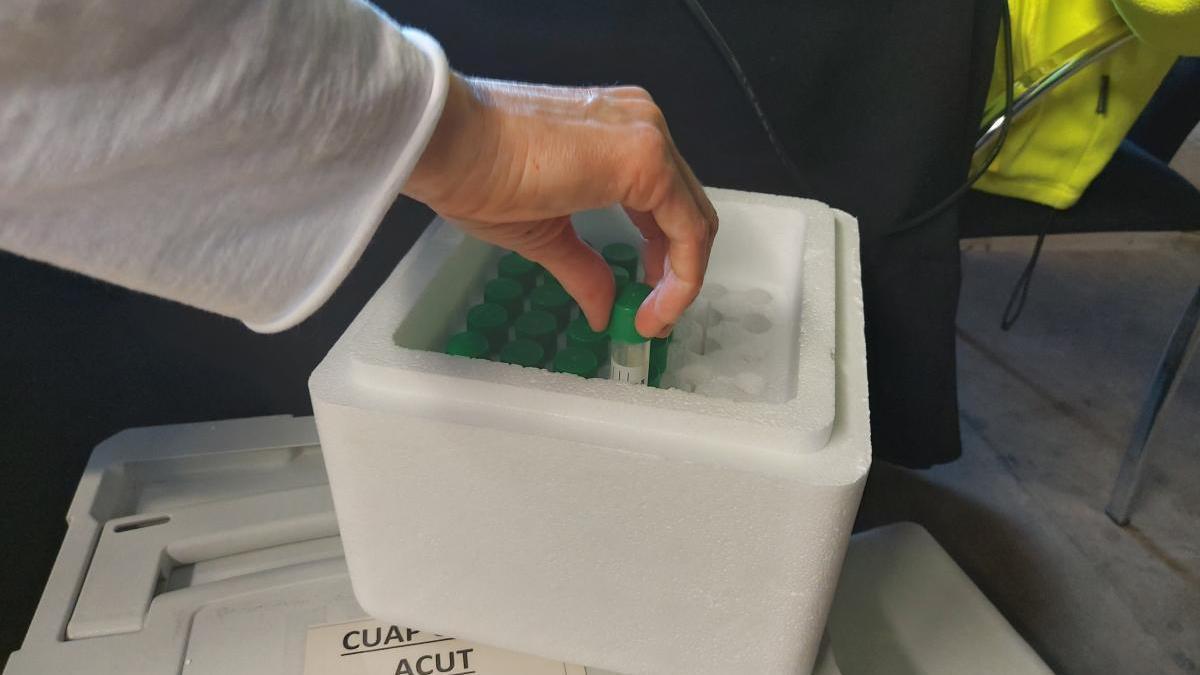 Nous cribratges amb PCR d'automostra a Roses