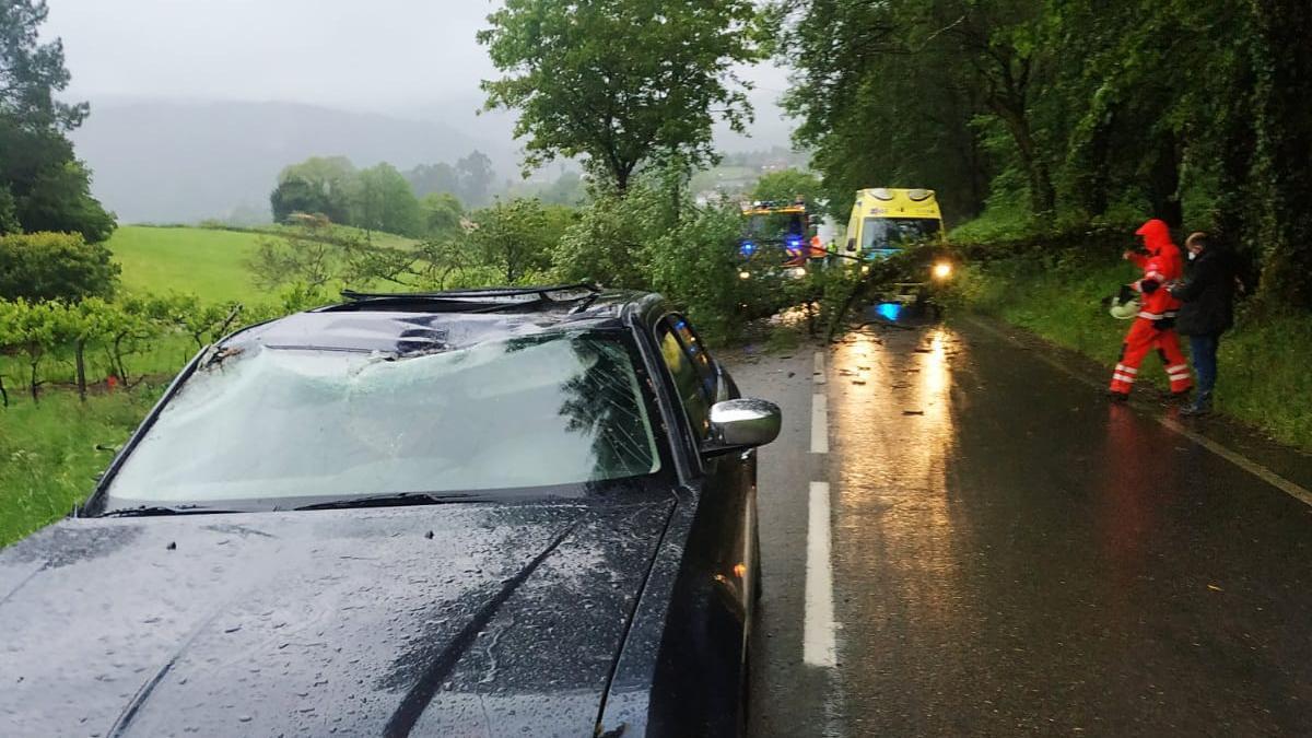 Automóvil siniestrado en Piloño por la caída de un árbol.