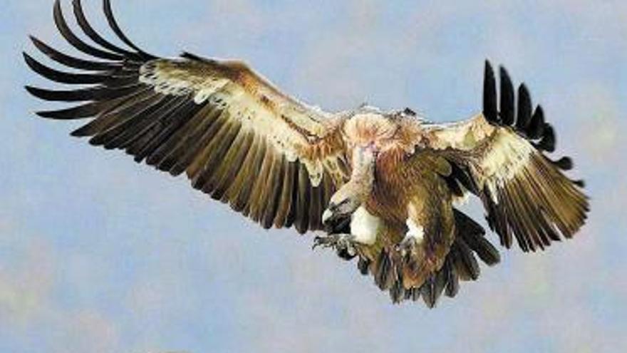 20.000 animales salvajes son envenenados cada año en España