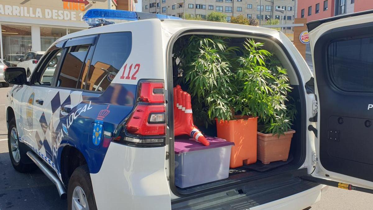 Las plantas intervenidas por la Policía Local tenían un tamaño considerable.