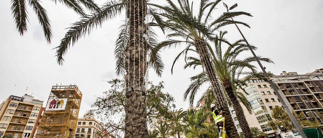 Operarios de la contrata colocaban este martes las primeras luces de Navidad, en las palmeras de la plaza de Luceros.  | PILAR CORTÉS