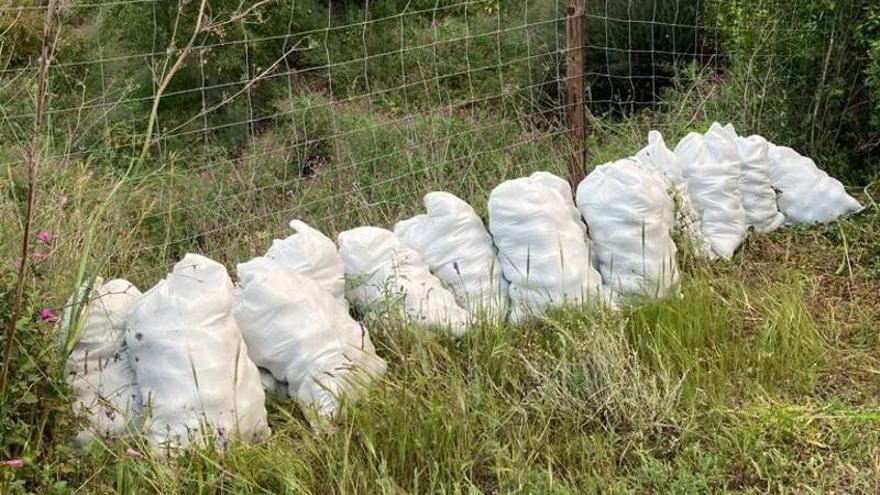 Sorprendidos cuando robaban 400 kilos de aguacates