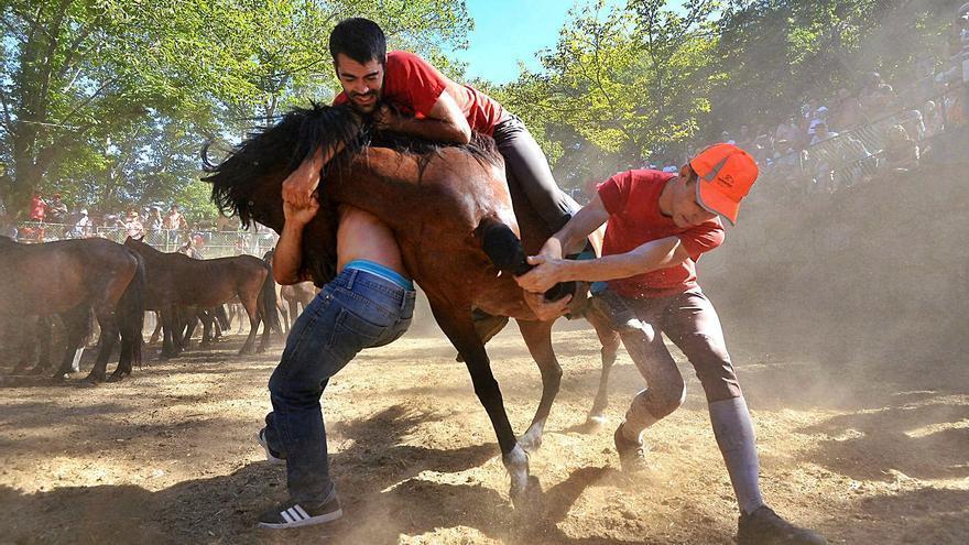 """Los ganaderos del Castrove, dispuestos a retomar este verano su """"rapa das bestas"""""""