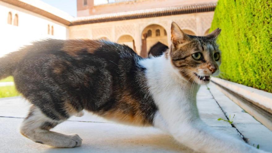 Els altres 'lleons' de l'Alhambra