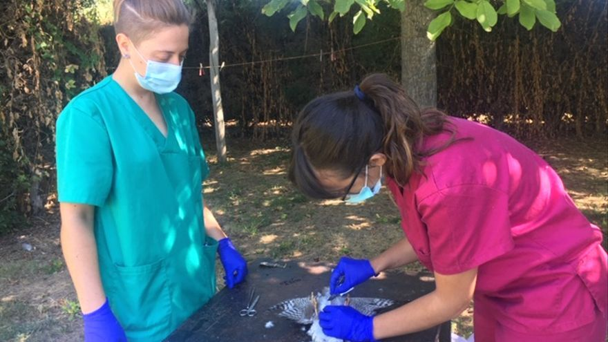 El Centro de Recuperación de la Fauna de Villaralbo ha recogido este año a 218 animales