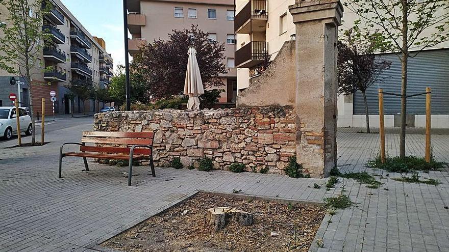 Sorpresa veïnal per la tala d'una figuera a Figueres