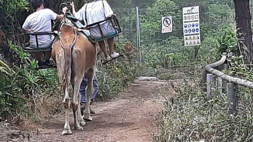 El cierre del anillo insular interrumpe la ruta turística del Camello Center