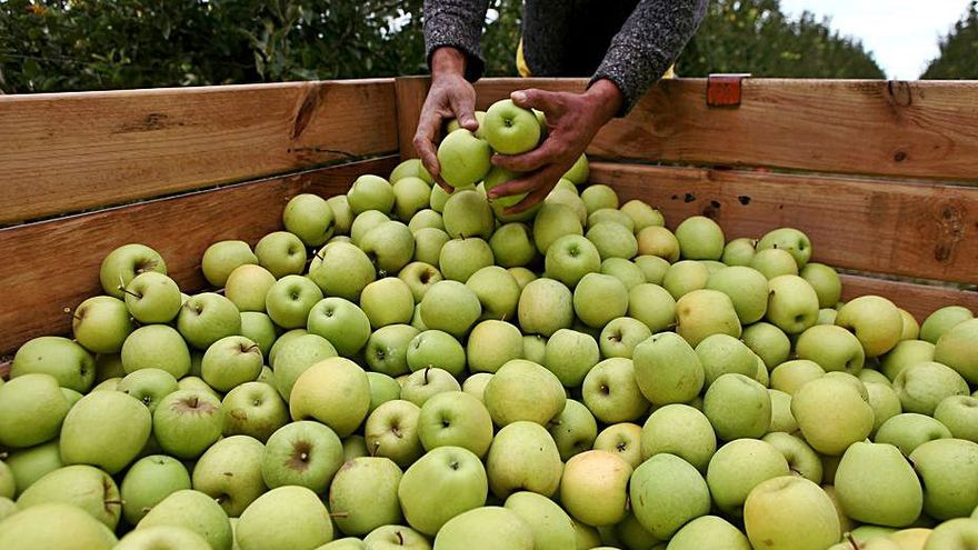 Sant Pere impulsarà el turisme fructícola per promoure les pomes