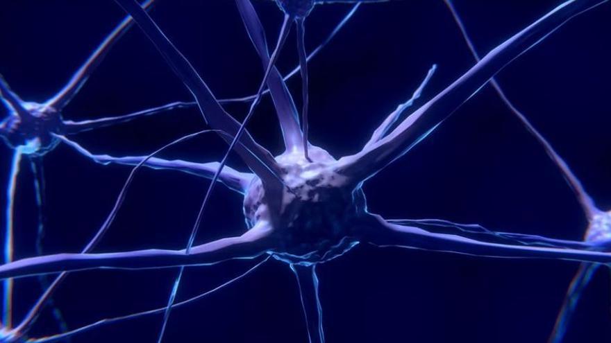 Descobreixen com l'estimulació d'una part del cervell fa variar l'activitat del cor