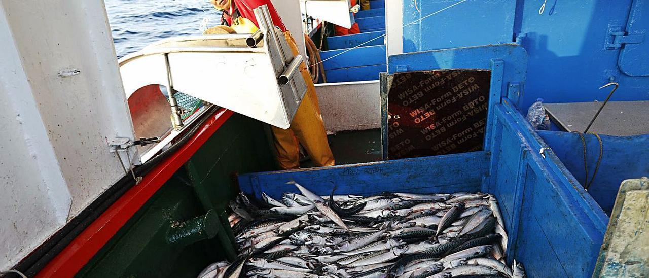 Una pescador maneja la maquinilla que gobierna la línea de anzuelos con la que se pescan xardas, apiladas a su lado. | Ángel González