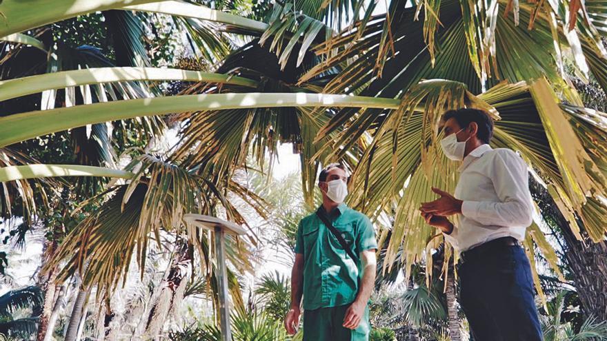 La serie 'ConCiencia Canaria' incide  en la importancia de cuidar los bosques