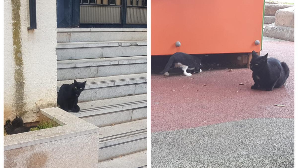 Imagen de algunos de los gatos que viven en el antiguo edificio de los juzgados de Borrull.