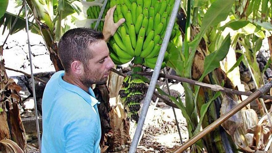 El PSOE difumina las esperanzas para blindar el plátano frente a la banana