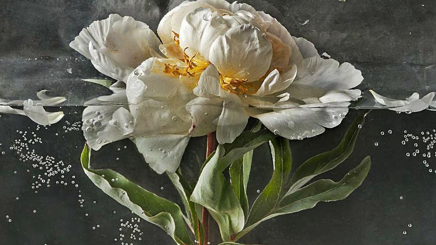 La flora de Pilar Pequeño