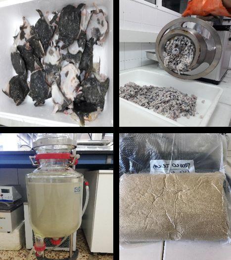 Producción de hidrolizados a partir de restos de rodaballo.