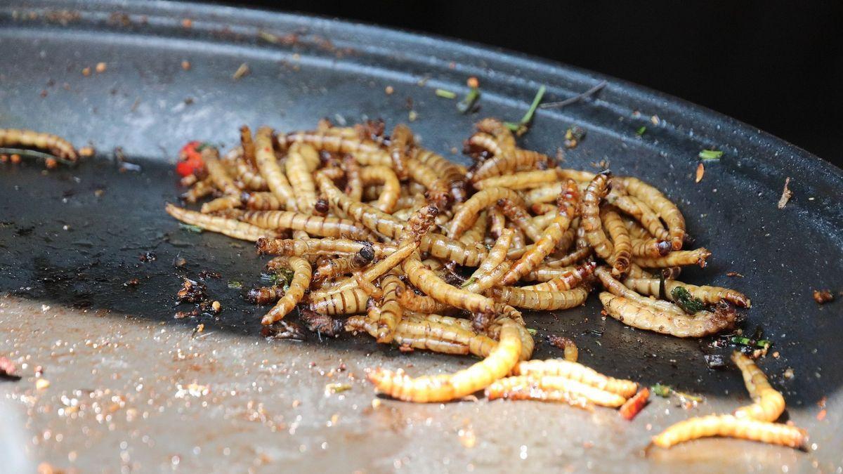 El gusano amarillo seco o gusano de la harina